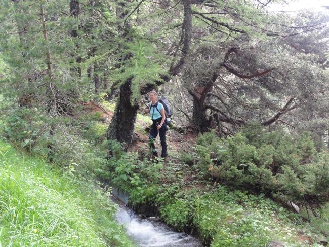 Entlang der alten Waalwege wandert es sich ganz entspannt durch den Lärchenwald.